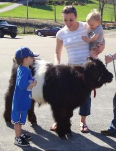 petting-zoo_5_3088574123